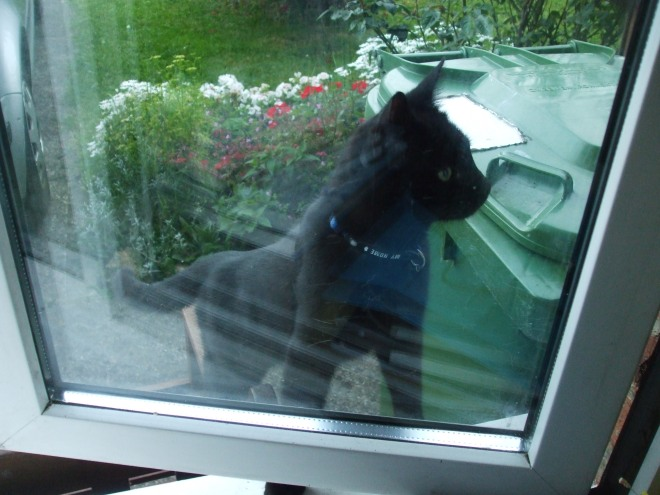 She doesn't like it when I try to close the window, and sits and cries.
